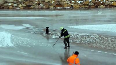 Donan Kızılırmak'ta mahsur kalan köpeği itfaiye kurtardı - SİVAS