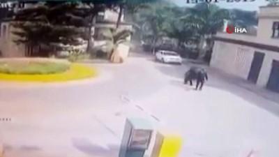 - Kenya'da Saldırganların Otele Giriş Görüntüleri
