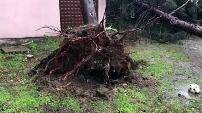 Şiddetli rüzgar - ORDU