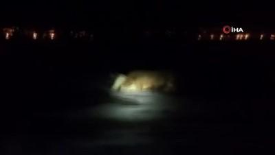 Buzda mahsur kalan ineği itfaiye ekipleri kurtardı
