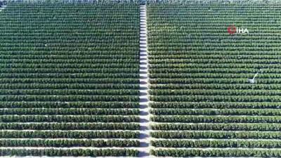 Sular altında kalan binlerce dönüm tarım arazisi havadan görüntülendi