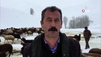 Zorlu kış şartlarında hayvancılık ile geçim sağlıyorlar