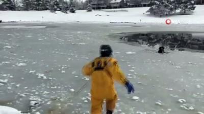 - İtfaiyeciler Buz Tutan Göldeki Köpeği Bata Çıka Kurtardı