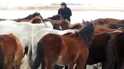 hayvan - Hayatını atlara adayan 'kovboy Ali Dayı' - KAYSERİ