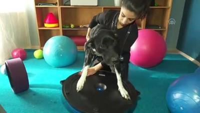 Engelli hayvanlara havuzlu ve masajlı terapi - ANKARA