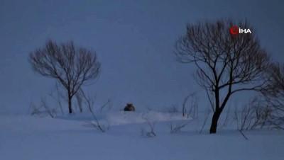 Aç kalan kurt köye indi... Kameraya böyle yansıdı.