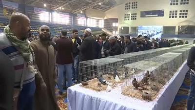 Kahire'de 200'den fazla güvercin türüne ziyaretçilerden büyük ilgi