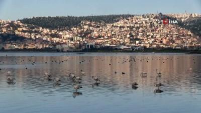 Kocaeli Körfezi göçmen kuşların yeni cenneti haline geldi