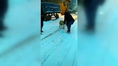 Köpeğin başındaki teneke çıkarıldı - TOKAT