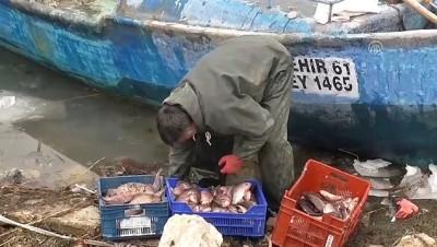 Çin sazanı balıkçıların yeni umudu oldu - KONYA