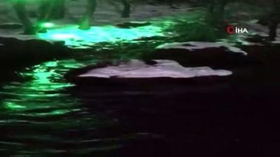 Koruma altındaki su samurunun kar keyfi kamerada