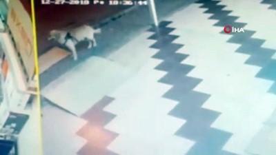 Önce köpeğe tekme attı, sonra sopa ile saldırdı