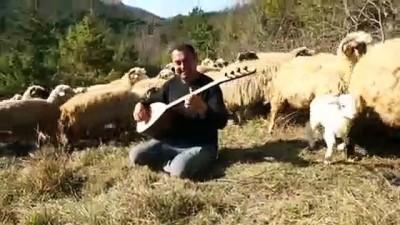 Koyunlarını otlatırken de sazını elinden bırakmıyor - KASTAMONU