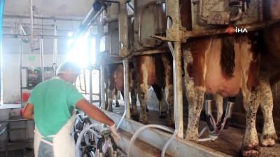 Süt üreticisi, süt fiyatlarının tekrar gözden geçirilmesini istiyor