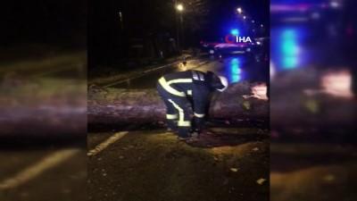 mel b -  Yalova'da dev ağaç yola devrildi