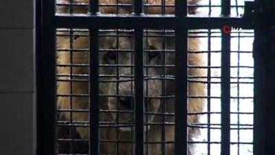 Bursa Hayvanat Bahçesi'nde hayvanlar soğuğa meydan okuyor