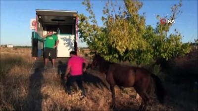 yerel gazete -  Sakatlanan atı ölüme terk ettiler