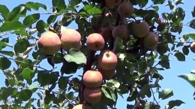 calisan kadin -  Atama bekleyen öğretmen hasattan para kazanıyor