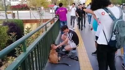 sokak kopegi -  Vicdansız sürücünün çarpıp kaçtığı köpeğe yoldan geçen gençler sahip çıktı