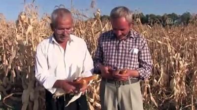 Elbistan'da 'cin mısırı' mesaisi - KAHRAMANMARAŞ