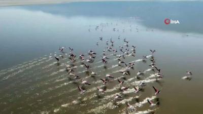 cennet -  'Allı turna'ların suyla dansı havadan görüntülendi