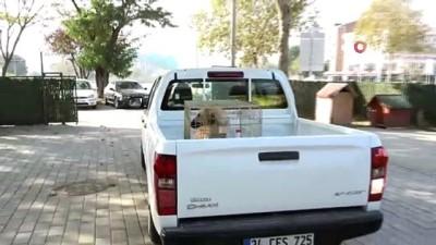 sokak kopegi -  Kazada yaralanan köpeğin gözyaşları...Büyükşehir o gözyaşlarını dindirdi
