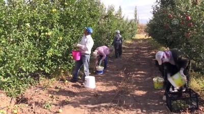 organik tarim - Doğunun organik meyveleri Avrupa pazarında - ERZİNCAN