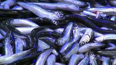 Kötü hava şartları balık fiyatlarını 4'e katladı