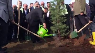 '11 Milyon Ağaç; Bugün Fidan, Yarın Nefes' kampanyası - BURSA