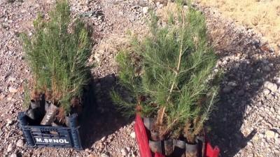 '11 Milyon Ağaç; Bugün Fidan, Yarın Nefes' programı (2) - TUNCELİ