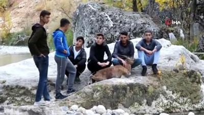 Gençler ve ekipler seferber oldu, tüm çabaya rağmen yaban keçisi kurtarılamadı
