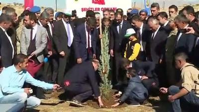İçişleri Bakanı Süleyman Soylu, fidan dikti - ŞIRNAK