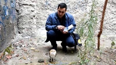 Yaralı bulunan peçeli baykuş tedavi altına alındı - MANİSA