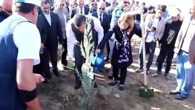 Fidan dikim alanı düzenlemesi sırasında mezar bulundu - BATMAN
