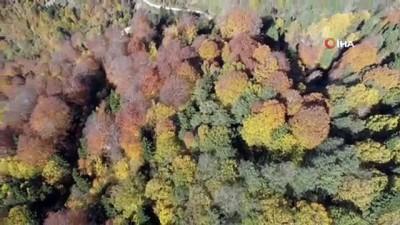 Karadeniz yaylalarında sonbahar havadan görüntülendi
