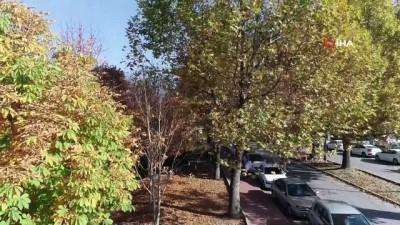 ESOGÜ'de sonbahar güzelliği