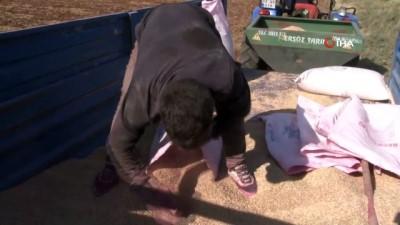 Şanlıurfa'da buğday ekim mesaisi başladı