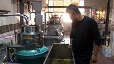 Aile boyu zeytinyağı üretiyorlar