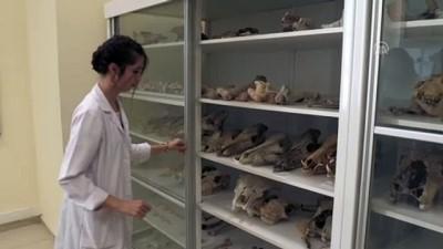 Milyon yıllık fosiller arkeoloji müzesinde sergilenecek - KIRŞEHİR
