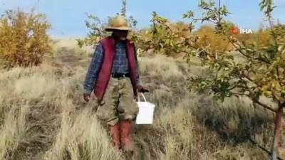 Yerli 'Robinson Crusoe' Ziya Dede adasında kışa hazırlanıyor