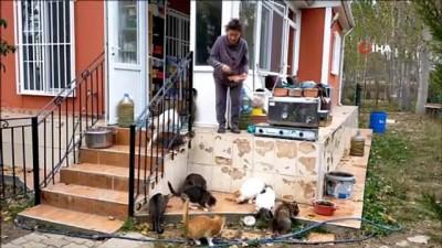 sokak kopegi -  Emekli maaşını sokak hayvanlarına harcıyor.. 'Onlar benim çocuklarım hepsi birbirinden kıymetlidir'