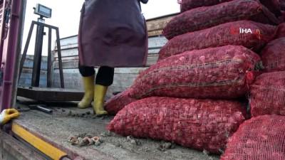 Deniz ürünleri ihracatında önemli bir yer tutan deniz salyangozu balıkçıların gelir kaynağı oldu