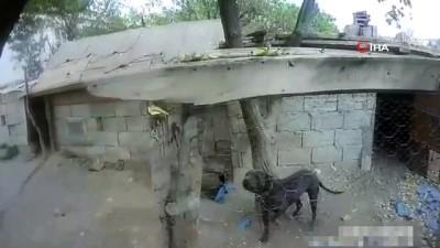 Kayseri'de tehlikeli ırk köpeklere el konuldu