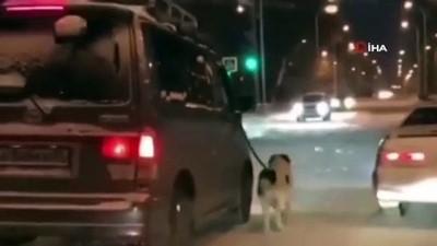 benin -  - Komşusuna kızdı, köpeğini buz tutan yolda yürüttü