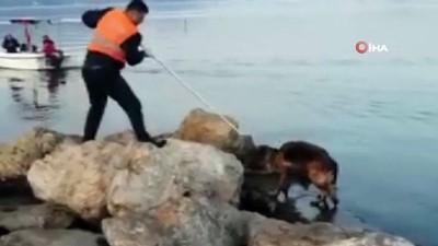 sokak kopegi -  Denize düşen köpek itfaiye tarafından kurtarıldı