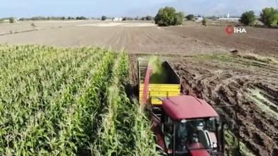 Elazığ'da 16 bin dekarda ekilen ikinci üründe bereket