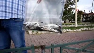 Ölü balıklar sahile vurdu