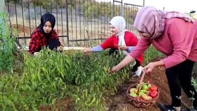 organik tarim - Üniversiteliler yurtta ihtiyaç sahipleri için de sebze yetiştiriyor - KONYA