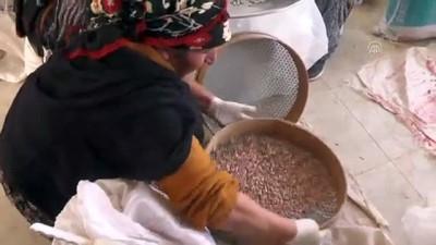 'Ovacık kurusu' kadın eliyle ekonomiye kazandırılıyor - TUNCELİ