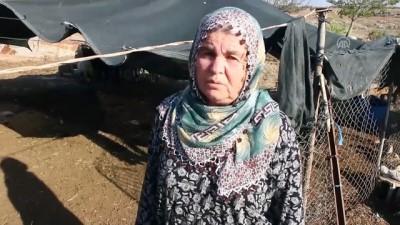 Besici çift koyunları çalındığı iddiasıyla polise başvurdu - ADANA